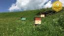 В Г Кашковский встреча с пчеловодами в канале Медовые горы 10 04 2019г