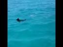 Дельфины 🐬 с собачкой