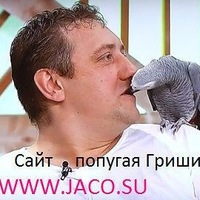 Попугай Григорий