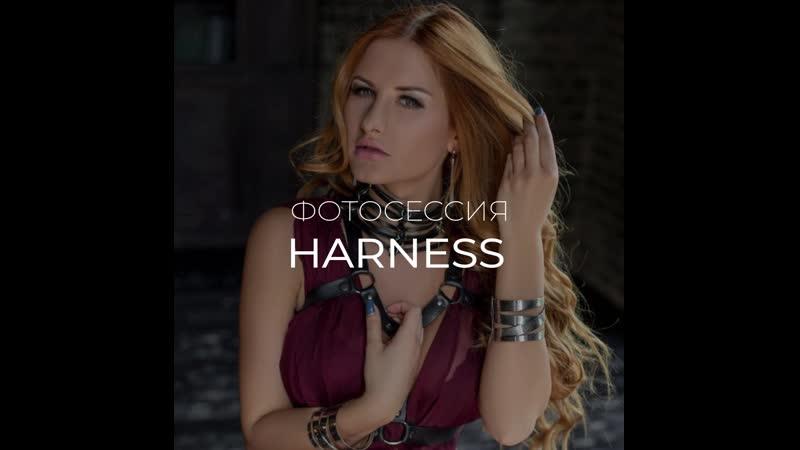 Harness Doberman