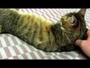 MVI 3893 04.01.2014г. Памяти моей кошки Муськи умершей 17.06.2018г.