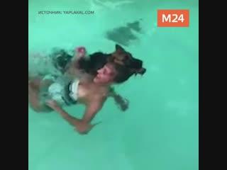 Собака решает спасти девушку в бассейне