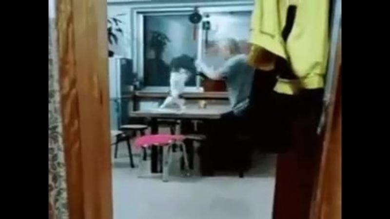 Когда зашёл на кухню а там батя с котом дерётся