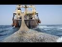 Xem tàu cá hiện đại thu triệu đô mỗi chuyến chế biến cá ngay trên tàu