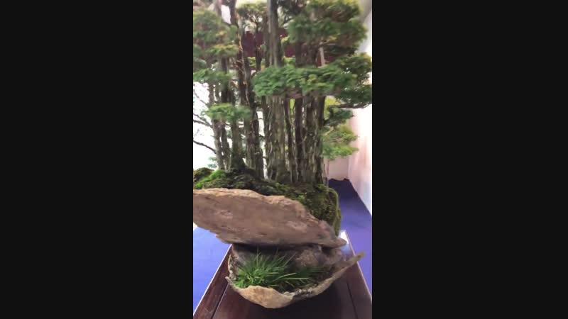 Tiny trees, an awesome Bonsai display.
