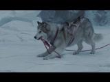 Белый плен Eight Below HD (1080p) 12+ 2006 (Дубляж Юрий Немахов)