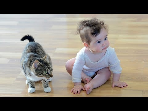 Funny Cats Protecting Babies Compilation (2017)