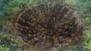 MedusaSub Black Clover Чёрный клевер 62 серия русские субтитры