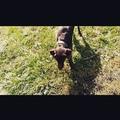 b_i_g_d_e_n video