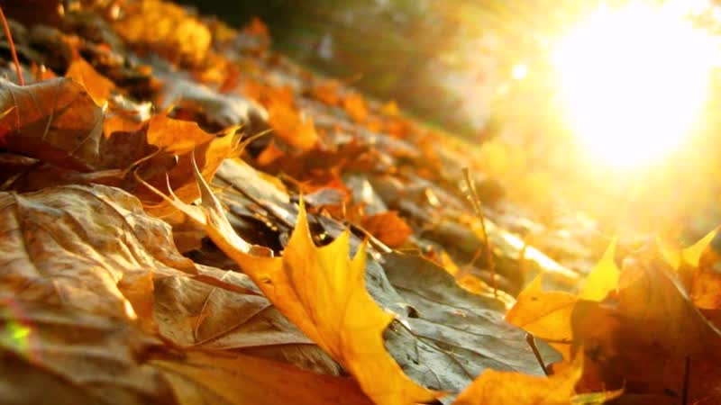 Прощание желтых листьев, кружащихся на ветру_