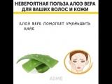 Невероятная польза алоэ вера для ваших волос и кожи