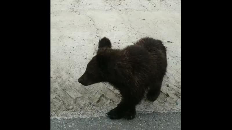 Рогожинское месторождение медвежата 🐾🐻🐻🐻