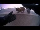 North Kansas City police officer rescues tiny kitten from median wall on I-29. Полицейский спасает котёнка.