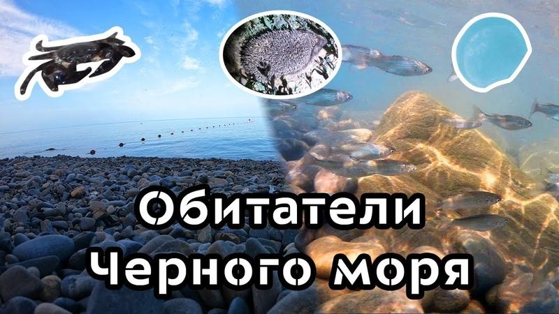 Черное море. Медузы, крабы и агрессивная рыба в озере.
