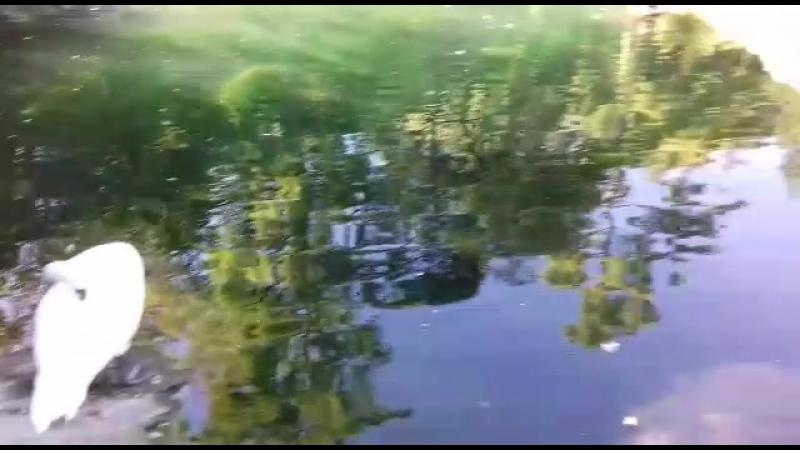 Ялта. Пруд в парке Воронцовского дворца