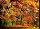 Осенняя Валерий Курас via