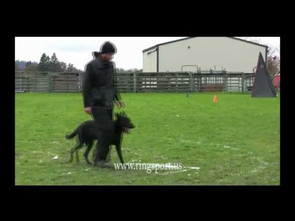 French Ring Sport Trial, Dutch Shepherd Animal, French Ring 1 routine