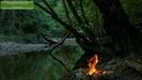 Звуки природы   Костер у берега реки, пение птиц в лесу   Beautiful Nature