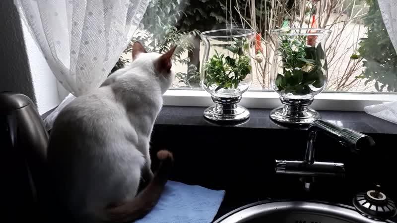 Видит око да зуб неймет Бедный наш кот Но он уже привык