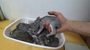Осмотр кроличьих гнезд. Насколько крольчата НЕПРИКАСАЕМЫ?