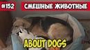 Про собак. Смешные животные, подборка 152.