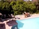 Малыши-альпаки развлекаются