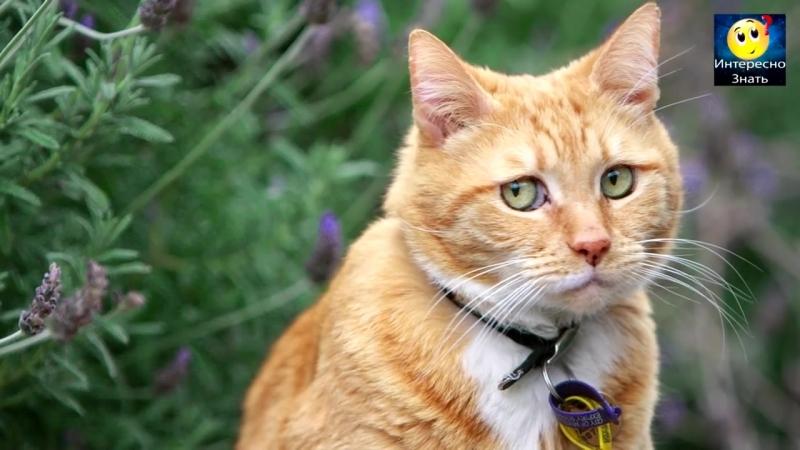 Что будет если удалить когти у кошки