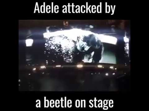 Adele- Attacked By a beetle on stage (REALLY FUNNY)