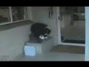 Радость пса, когда вернулся пропавший кот