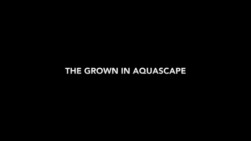 Nano Aquascape Timelapse - Scree by James Findley - Full Video Also Available
