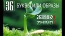 Буквица или азбука Послание предков Детям Буквы или образы