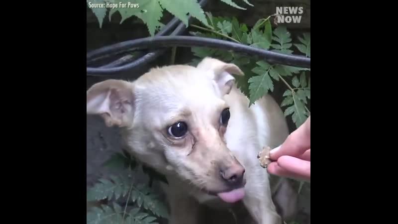 Бездомная собака нашла новый дом и любящих хозяев