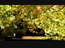 Bach - Air on the G String 1 HOUR Extended Classical Music for Studying Er_a79 music