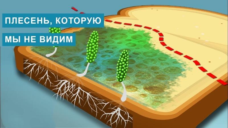 Вот почему НЕЛЬЗЯ есть хлеб который начал цвести