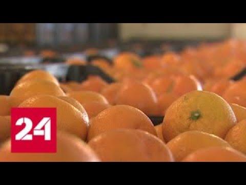 Мандариновый сезон в Абхазии в Россию привезут 16 тысяч тонн Россия 24