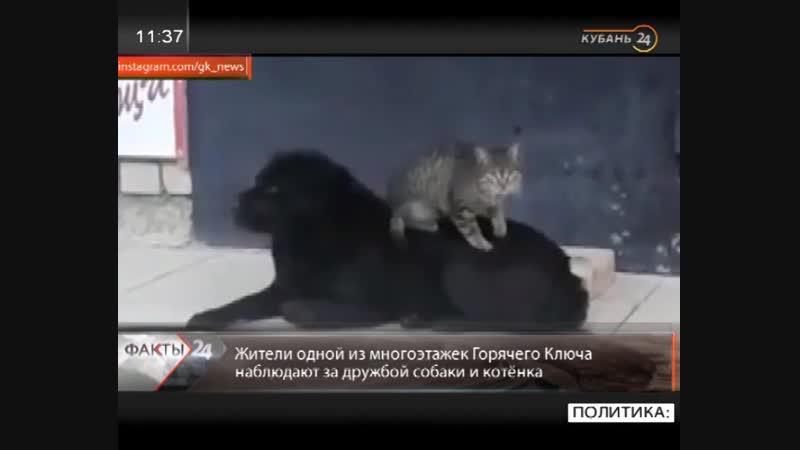 Кубань 24 - Жители Горячего Ключа начали искать дом для подружившихся котёнка и собаки. / Наша группа в ВК: Горячий Ключ 24.