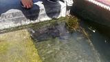 Eels @ Avon River