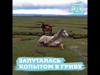 Люди спасли лошадь, запутавшуюся копытом в гриве
