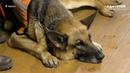Пэт-терапия в зоопарке Удмуртии: как лошади и собаки возвращают радость жизни
