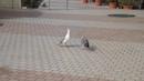 Крик чайки - звуки на берегу моря в Бухте Мечты Ласпи, Крым