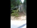 Лисичка на дороге
