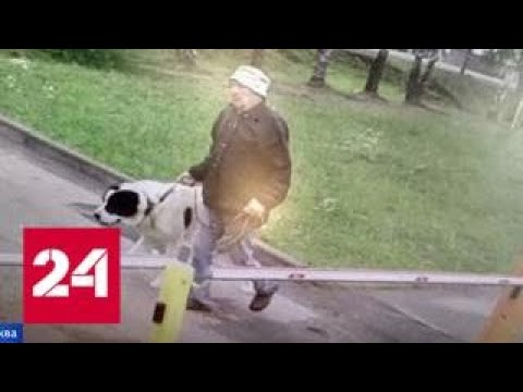 В Новой Москве алабай покусал девушку: хозяин пса держит в страхе весь поселок - Россия 24