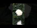 Вальс цветов 🌸