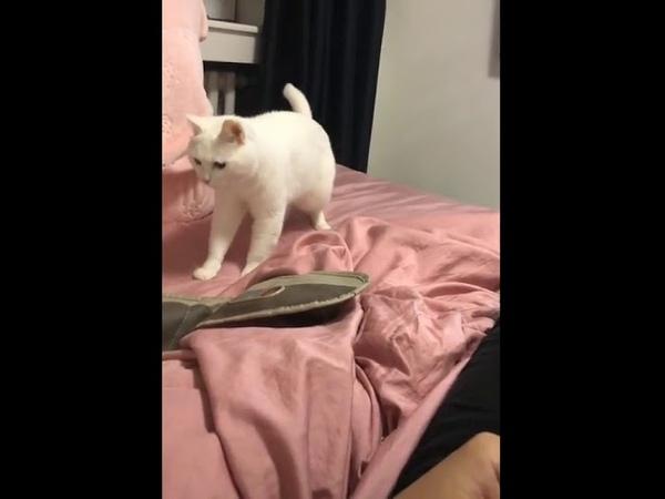 Beatboxing cat