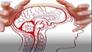 7 фактов о работе мозга, которые доказывают, что мы можем всё!