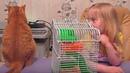 VLOG Уйду я от вас, хозяева - вы мышь завели. Кот и хомяк. Влоги про животных.