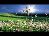 Summer Music Meditation ,Nature Scenery Sound,Deep Relaxation Chill Emotions Relaxing Music