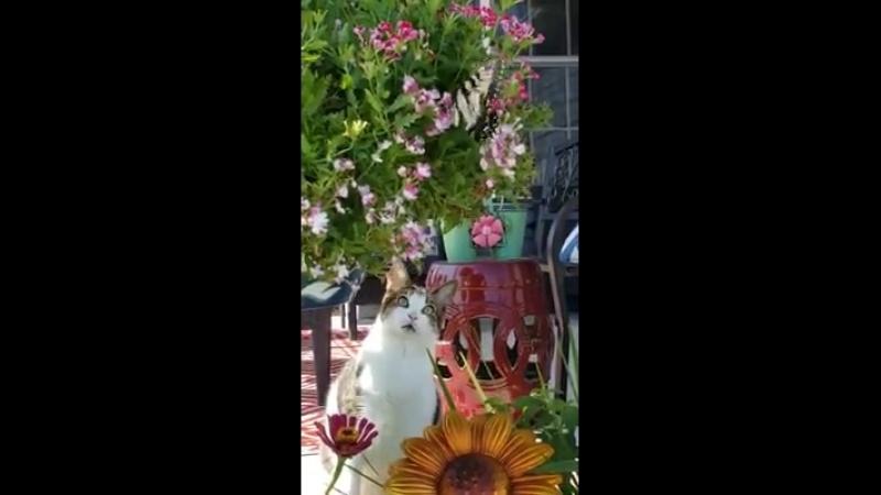 Interessant! 😍 Mehr bei Garten... - Garten Gestaltung Ideen und Tipps