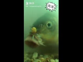 ปลาฉลาด