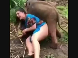 @ wildlife_video слоненок нашел свою пару😅